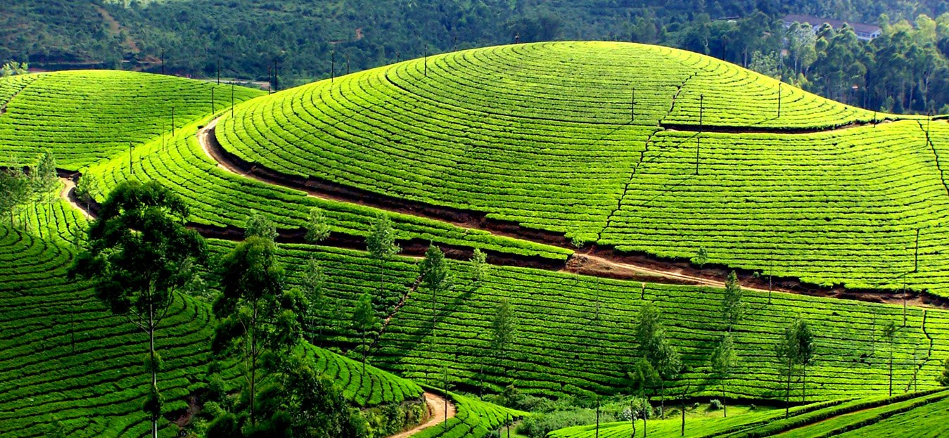Top things to do in Munnar