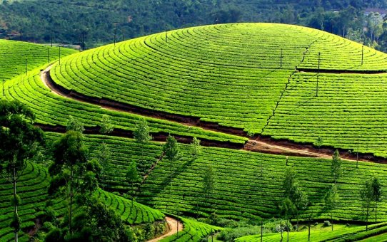 3 Best road trips in Kerala where nature will overwhelm you