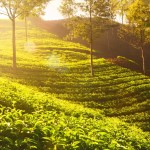 Hill Stations in South India you must visit in 2017