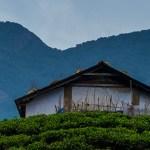 WAYANAD: THE ECO-TOURIST'S PARADISE