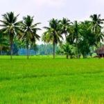 Spectacular Places To Visit In Konaseema