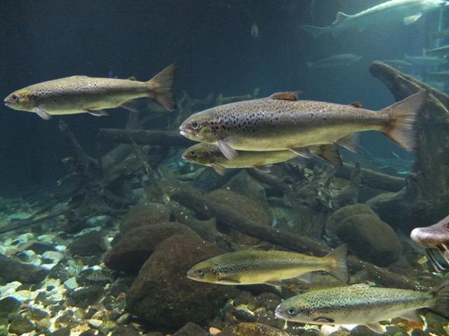 1. Studienjahr Praxis Ernährung/Fisch Teil 1 (KW 12)