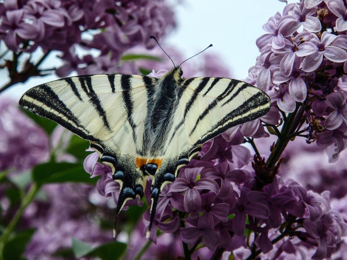 Lepkék és pillangók