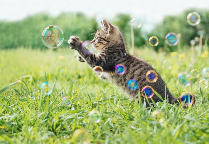 Te is észrevetted macskádon ezt a furcsa viselkedést? Eláruljuk, mi okozza!