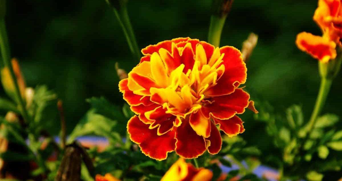 Ezekkel a növényekkel teheted még színesebbé a kertedet ősszel