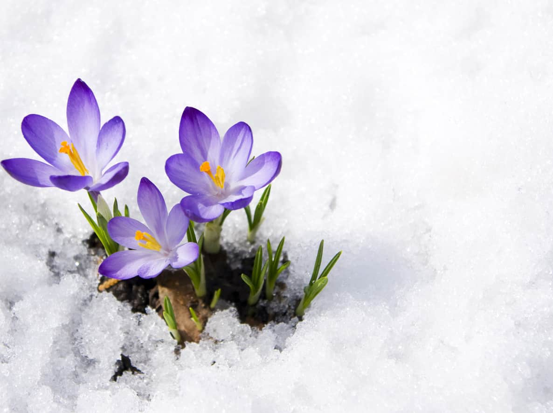 Színeket a kertbe télen is! – Ezek a növények a legkomorabb napokon is vidámmá varázsolják otthonodat
