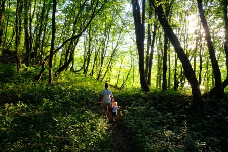 adult and child walking through forest