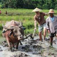 A Practice in Plowing: The Living Land Farm in Luang Prabang, Laos