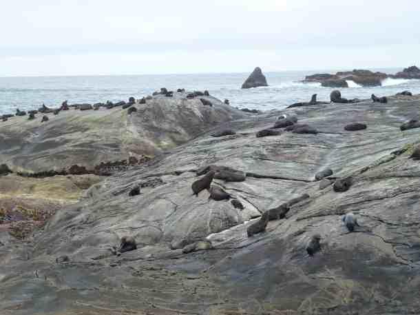 Doubtful Sound Seals