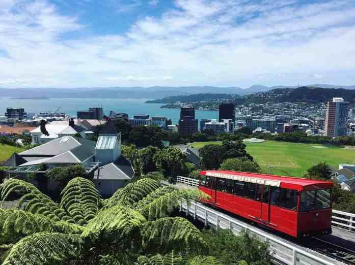 Wellington on a good day - Stray New Zealand