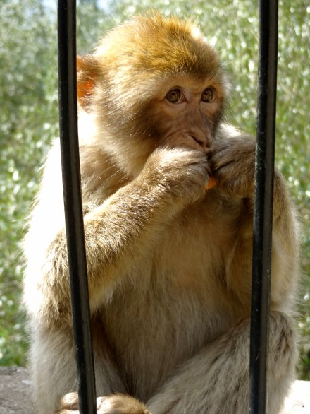 Monkey-ing around!