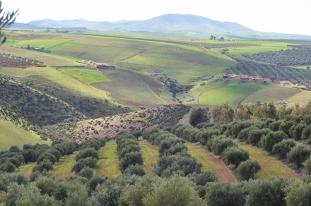 Farm in Morocco