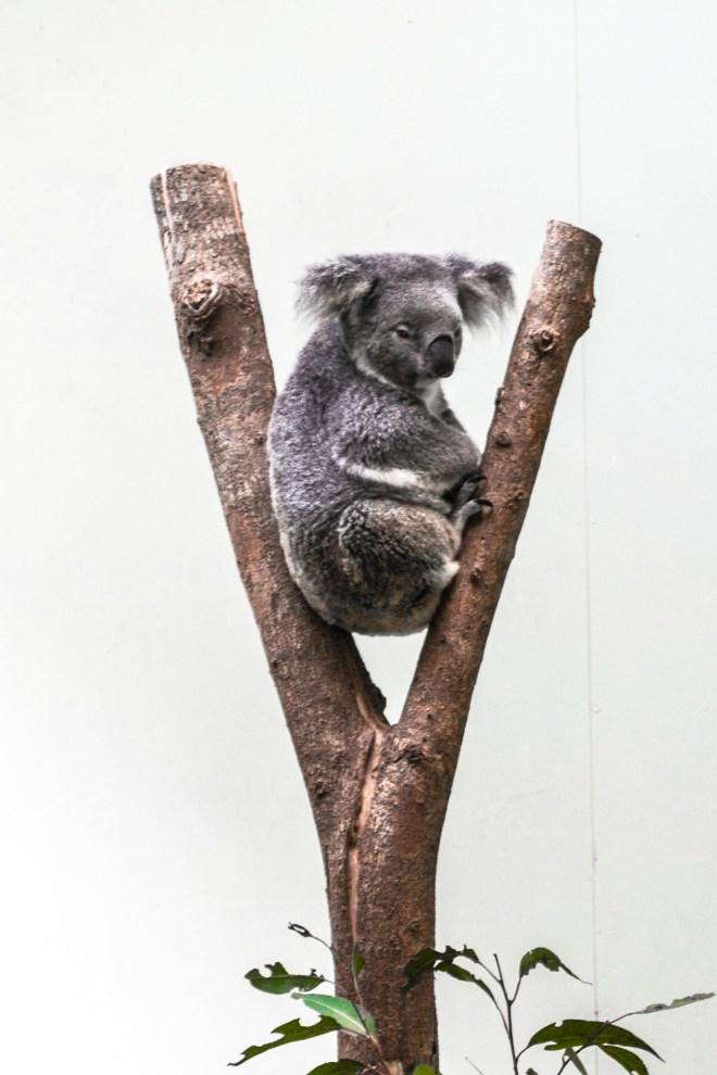 Rainforestation, Cairns, Australia, Conn GÇô 1