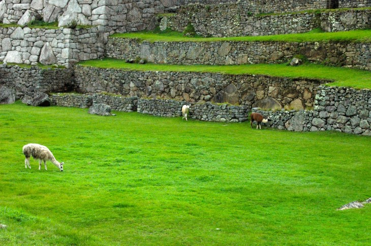History comes alive if you visit Machu Picchu.