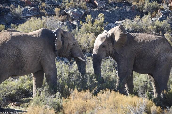 6 elephants