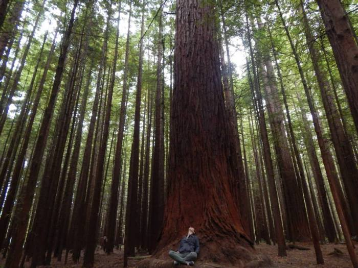 Redwood Forest National Park – R.I.P. Ally Willen, your smile lit up this world