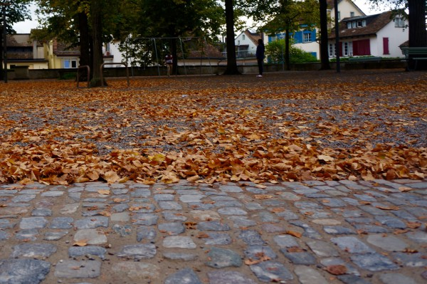Leaves, Zurich, Switzerland - NELSON - Photo1
