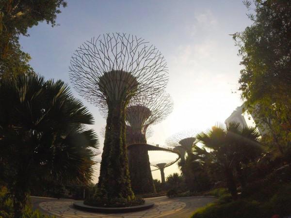 Super Trees, Singapore, Kirkpatrick, Photo 5