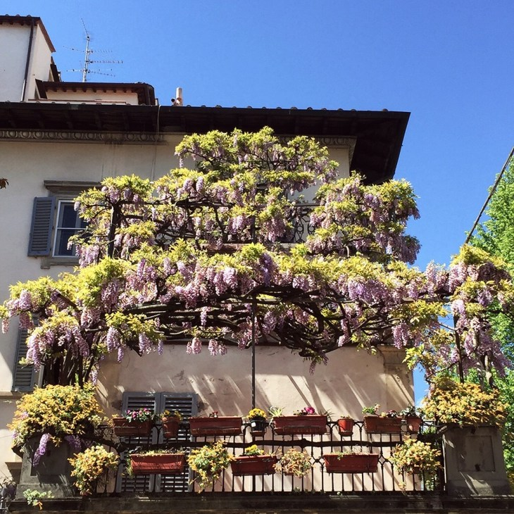 Gorgeous wisteria and potted flowers on a terrace