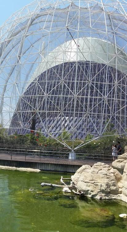 Here is part of the oceanographic aquarium within La Ciudad de Las Artes y Las Ciencias.