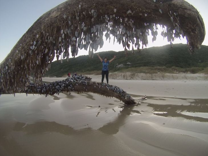 We found this beautiful dead tree branch washed up on the beach. Even though it is dead, we can see that it is now home to hundreds of seashells.