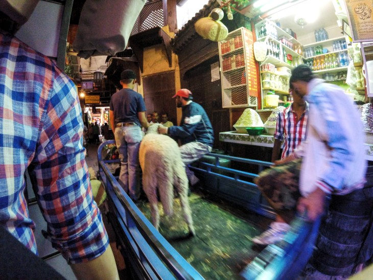 A blurry example of how sheep were transported in the days leading up to Eid. The blurriness almost reflects how chaotic these days were, for sheep and people alike.