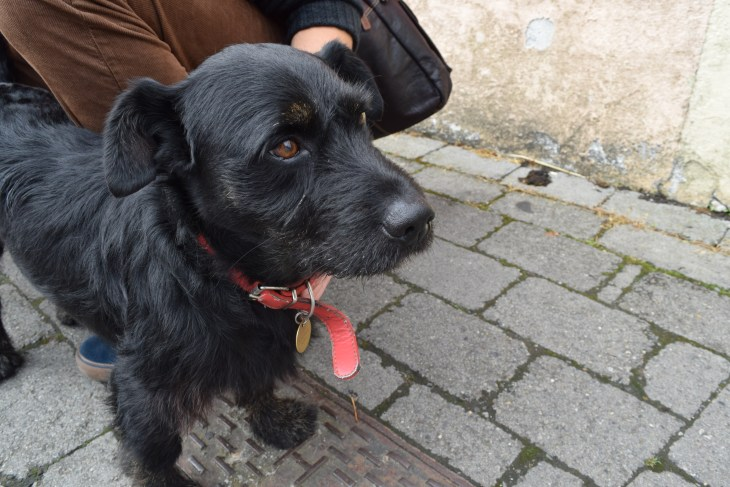 Meet Jack. King of the streets of Kildare and healer of puppy-withdrawal in all visiting students who had to leave their furry best friends home while studying abroad.