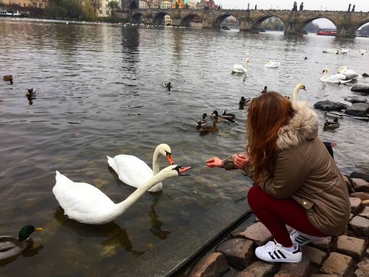 feeding-ducks-prague-photo7-annissa-peterson