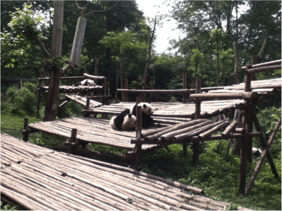 Chengdu, China Panda