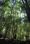 Au pied de la forêt