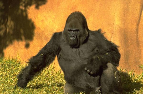 job costing overtime - an 800 lb gorilla