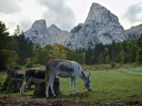 Esel am Anton-Karg-Haus