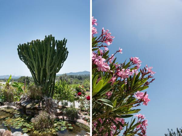 Ibiza flora bloemen