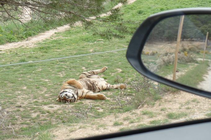 tijger costa blanca spanje