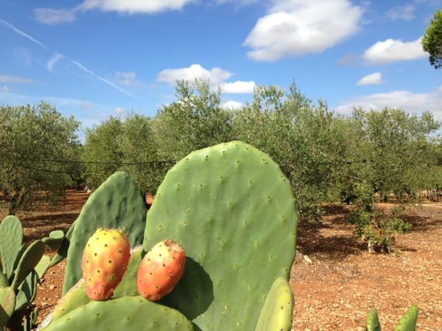 Rondrijden-Puglia-Cactus