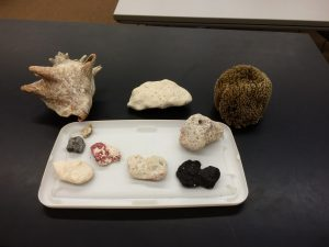 These are different rocks that I found on the beach in Grand Turk, as well as a Conch Shell (that I found) and a real sponge (that I purchased. It is illegal to harvest them unlicensed).