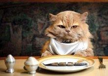 gato_comiendo