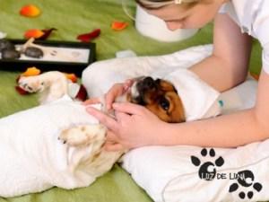 masaje perro