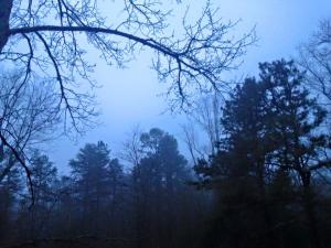 Fog at Browning House