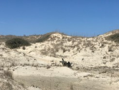 Sights from the hiking trial that parallels the beach access trail at False Cape Landing.