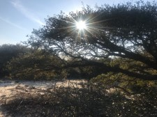 The sun peeking through a live oak. This view can be found camping at Barbour Hill on the beach side.