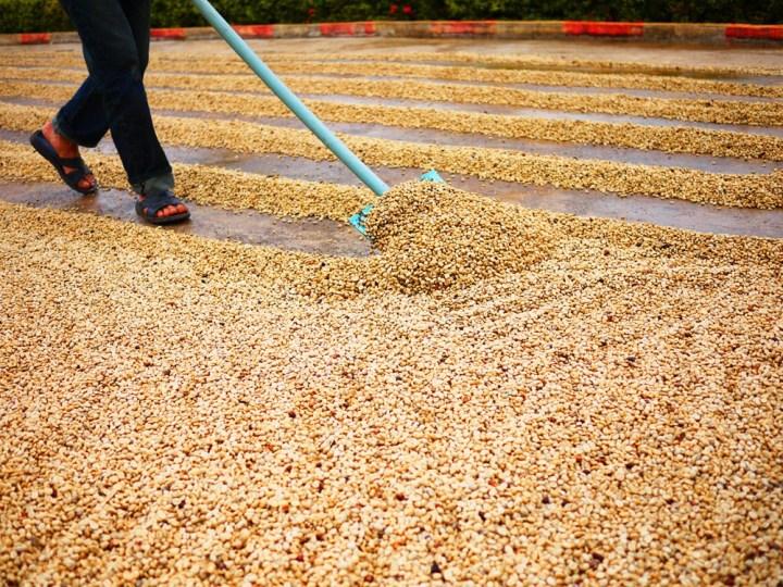 Coffee-processing-Dry