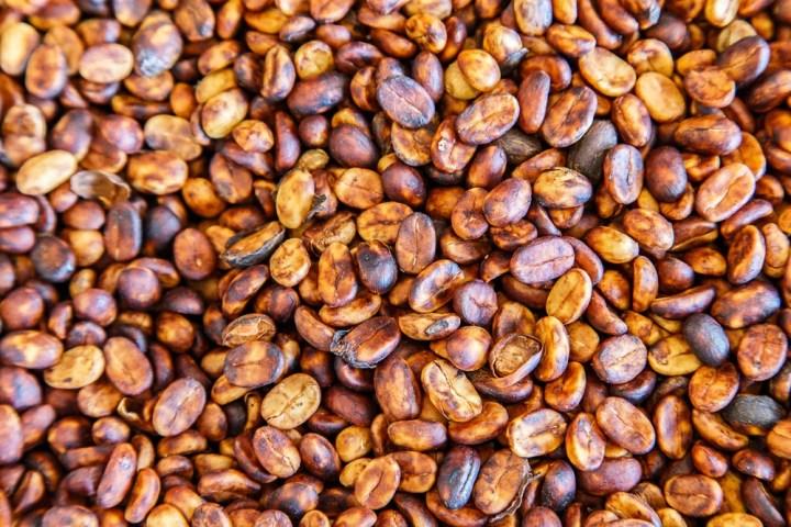 Coffee-processing-dried