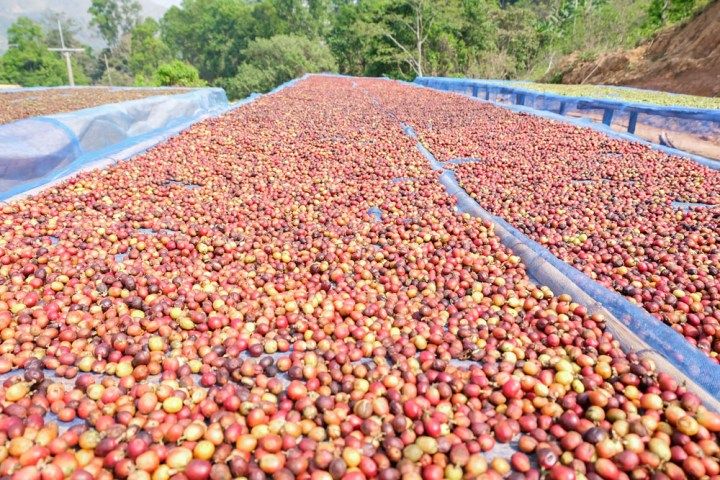 Coffee-processing-outside