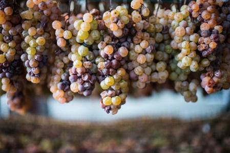 Illinois Wine