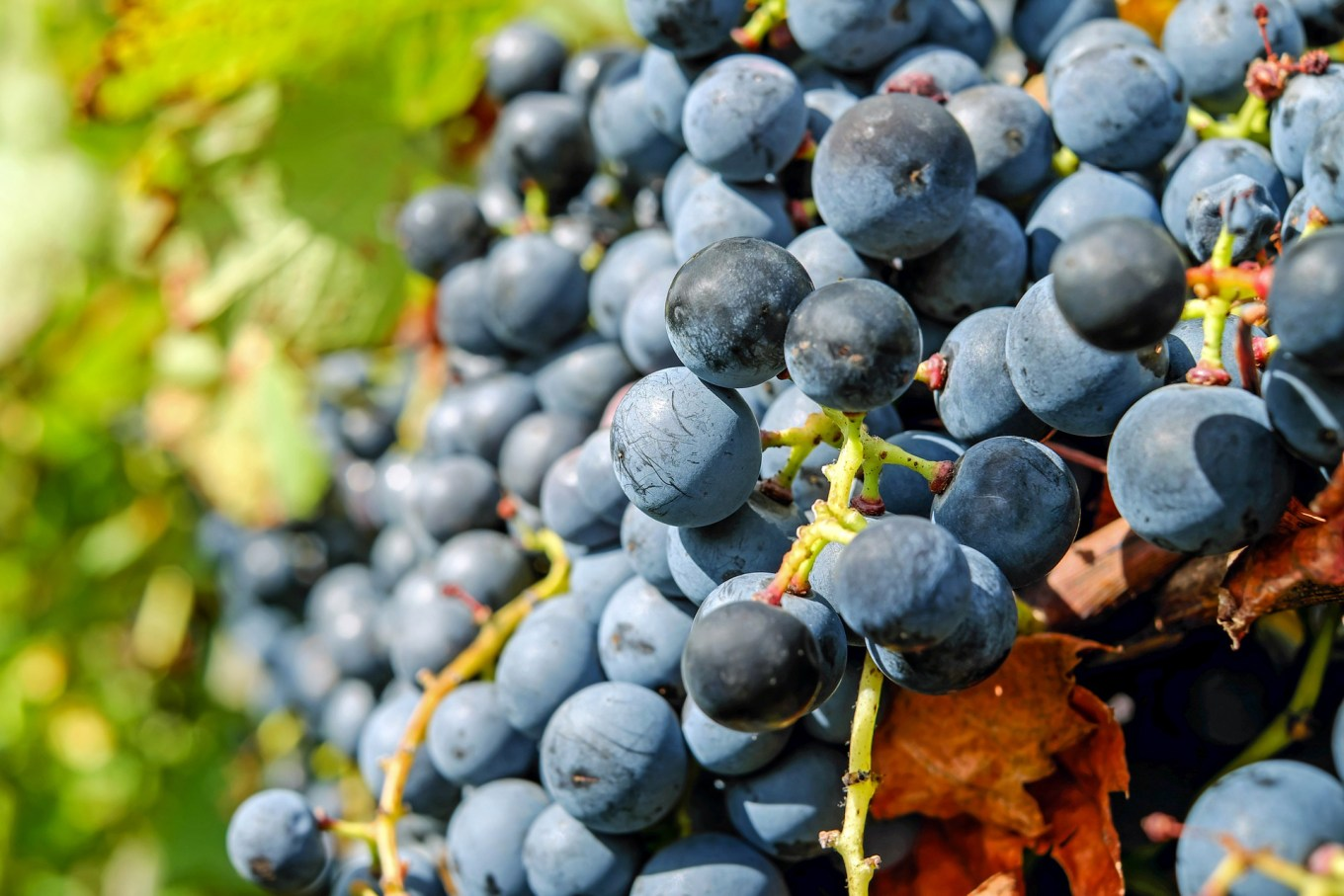Wineries in Maine