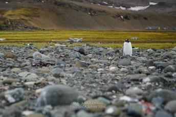 antartica-05616