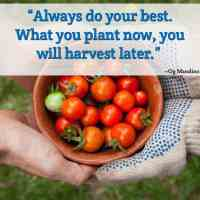 """""""Always do your best. What you plant now, you will harvest later."""" ~Og Mandino"""