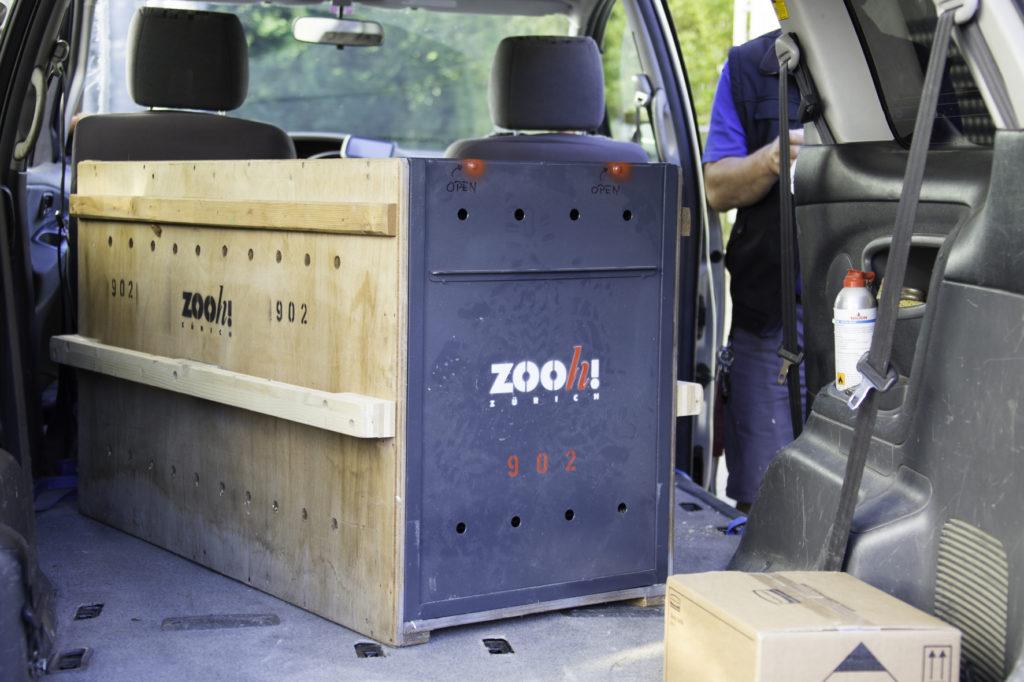 Verladen Transportkiste Schneeleopard Orya Transport nach USA hier einige Bilder zu meinem Schneeleoparden-Artikel vom nächsten Donnerstag. Es geht darum, dass nun das letzte Jungtier in die USA ausgeflogen wurde. Herzliche Grüsse, carmen