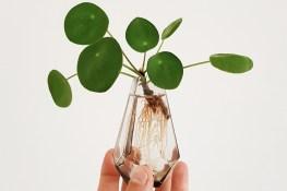 """Ecológico y sostenible; dos nociones para orientar al consumidor """"verde"""""""